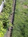 příklad uložení mezi okrasný trávník a záhon