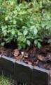 Zahradní obrubník, palisáda 2,4m tmavě hnědá
