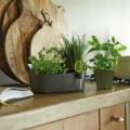 Prima-květináče truhlíky na bylinky - moderní, designový obal určený pro pěstování bylinek, součástí obalu jsou speciální nerezové nůžky ELHO samozavlažovací plastové venkovní závěsné