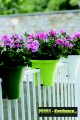 Prima-květináče Plastový květináč ELHO Corsica Flower Bridge 30, závěsný květináč na balkon samozavlažovací plastové venkovní závěsné