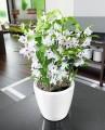 Prima-květináče Samozavlažovací květináče Lechuza Classico - elegantní, designové, moderní, interiérové květináče do vašeho bytu samozavlažovací plastové venkovní závěsné