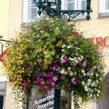 Prima-květináče samozavlažovací květinové mísy, závěsné sestavy na sloupy veřejného osvětlení, květníky na sloupy Green City samozavlažovací plastové venkovní závěsné
