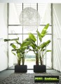 Prima-květináče Květináče ELHO Pure Soft Brick Long Wheels – moderní, venkovní, hranaté, velké, plastové obaly na květináče, květináče, vonkajšie, veľké, kvetináče samozavlažovací plastové venkovní závěsné