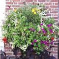 Prima-květináče velkoobjemové květináče Green City samozavlažovací plastové venkovní závěsné