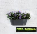 Prima-květináče kvalitní nástěnný květináč, květináče na zeď, stěnu, stěny, závěsné květináče na zeď ELHO samozavlažovací plastové venkovní závěsné