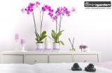 Prima-květináče barevné kryty Minigarden® basic jsou určené k pěstebnímu systému Minigarden® basic S a nahradí původní kryty bílé barvy. samozavlažovací plastové venkovní závěsné