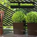 Prima-květináče Plastové obaly na květináče Finezia Juka – levné, moderní, interiérové, venkovní, mrazuvzdorné, designové, originální hranaté obaly na květináče samozavlažovací plastové venkovní závěsné