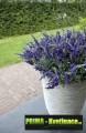 Prima-květináče keramické květináče venkovní Capi samozavlažovací plastové venkovní závěsné