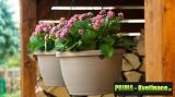 Prima-květináče Plastový samozavlažovací květináč Žardina Siesta 25 - závěsný Plastia samozavlažovací plastové venkovní závěsné