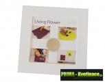 Prima-květináče interiérový nástěnný květináč, designový, dekorační, okrasný závěsný květináč, živý obrázek samozavlažovací plastové venkovní závěsné