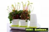 pěstební systém Minigarden
