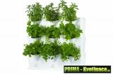 Zelené domácí stěny Minigarden