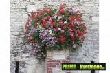 Velké květinové nádoby na zeď