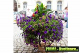 Květinové sestavy – trojnožky