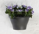 Prima-květináče kvalitní nástěnný květináč, květináče na zeď, stěnu, stěny, truhlíky na balkon na stěnu ELHO samozavlažovací plastové venkovní závěsné