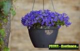 Prima-květináče Plastové samozavlažovací závěsné květináče, závěsné květináče na balkon, závěs na květináč, závěsné venkovní květináče, závěsné květináče do bytu samozavlažovací plastové venkovní závěsné