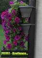 Prima-květináče unikátní, levné květináče květníky na okapové roury, vkvětináče na okapové svody ELHO samozavlažovací plastové venkovní závěsné