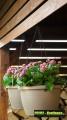 Prima-květináče Plastový samozavlažovací květináč Žardina 25 - závěsný samozavlažovací plastové venkovní závěsné