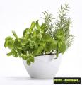Prima-květináče Samozavlažovací květináče na bylinky do kuchyně – levné, dekorační, malé, designové samozavlažovací květináče do interiéru Plastia samozavlažovací plastové venkovní závěsné