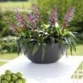Prima-květináče Květináče ELHO Pure Soft Bowl – moderní, originální, venkovní, velké květináče, vonkajšie, veľké, kvetináče, črepníky samozavlažovací plastové venkovní závěsné