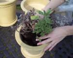Prima-květináče substrát Managreen, pěstování květin, květníky, květináče truhlíky samozavlažovací plastové venkovní závěsné
