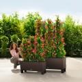 Prima-květináče Samozavlažovací květináče Lechuza Trio Cottage - velké, hranaté, venkovní květináče samozavlažovací plastové venkovní závěsné