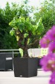 Prima-květináče Samozavlažovací, venkovní, hranaté květináče Lechuza Cube Cottage 40 samozavlažovací plastové venkovní závěsné